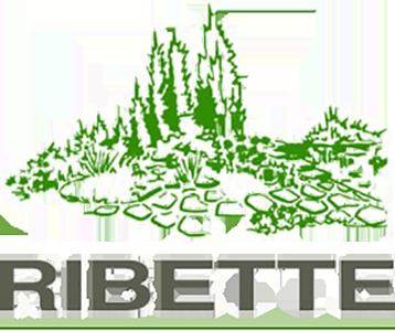 Ribette